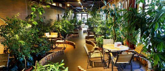 Зимний сад, общая зона отдыха, 5 этаж, Баня С легким паром!